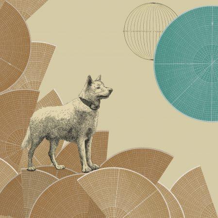 #30-Wolf-Dog